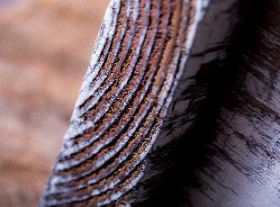 木彩のイメージ